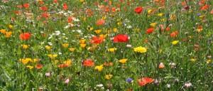 Prati fioriti